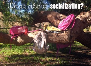 socializtion